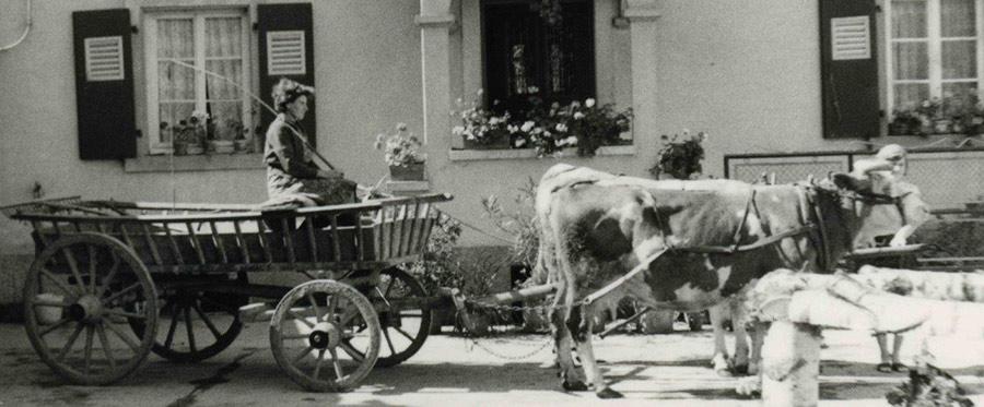 Fig. 3 : Attelage de bœufs en Alsace, 1962 – Source : Auteur