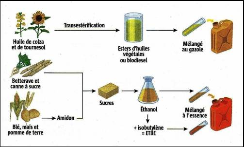 Fig. 4 : Les filières biocarburant – Source : Energie-online.fr