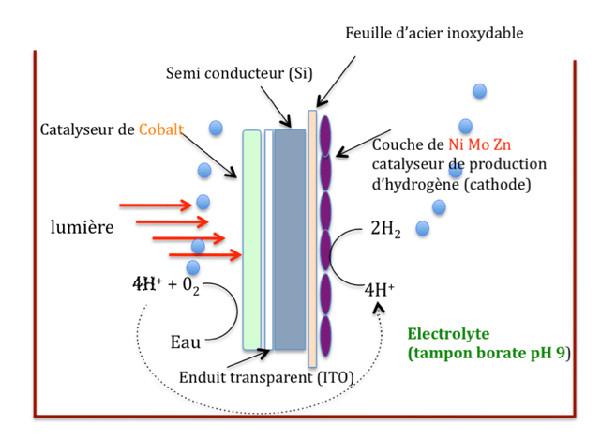 Fig. 6 : Représentation schématique d'une cellule photo électrochimique déposée dans un bain d'électrolyte. L'oxygène et l'hydrogène sont libérés sous forme gazeuse – Source : Reece et al, 2011