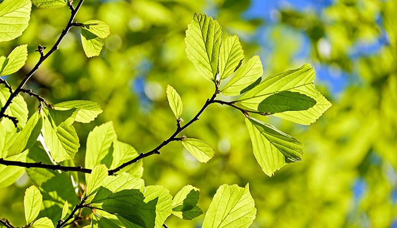 Photosynthèse et biomasse