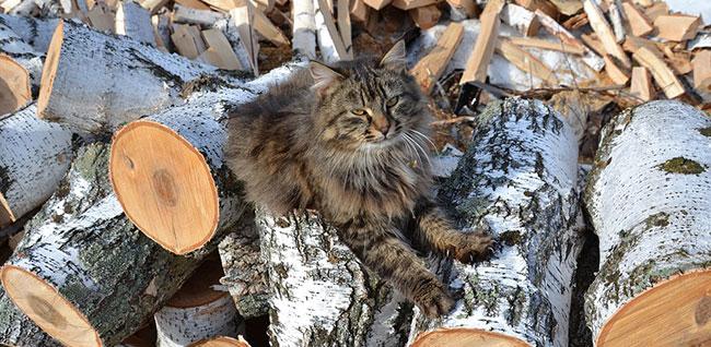 Fig. 4 : Bois de chauffage – Source : Pixabay