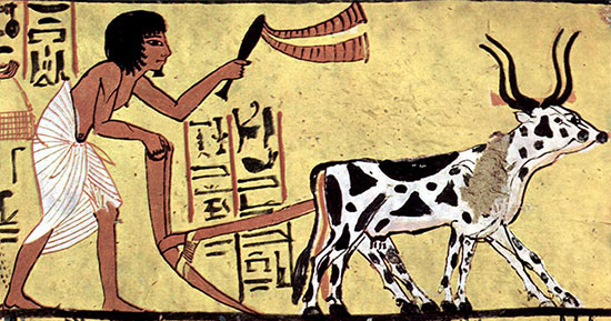 Fig. 3 : Traction animale ancienne - Source : Deutsch: Maler der Grabkammer des SennudemEnglish: Painter of the burial chamber of Sennedjem [Public domain], via Wikimedia Commons