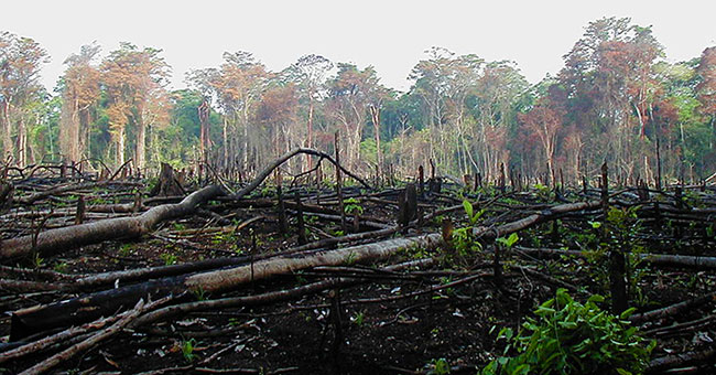 Fig. 7 : La déforestation - Source : Jami Dwyer [Public domain], via Wikimedia Commons