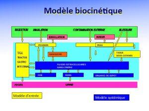 Fig. 6 : Modèle biocinétique