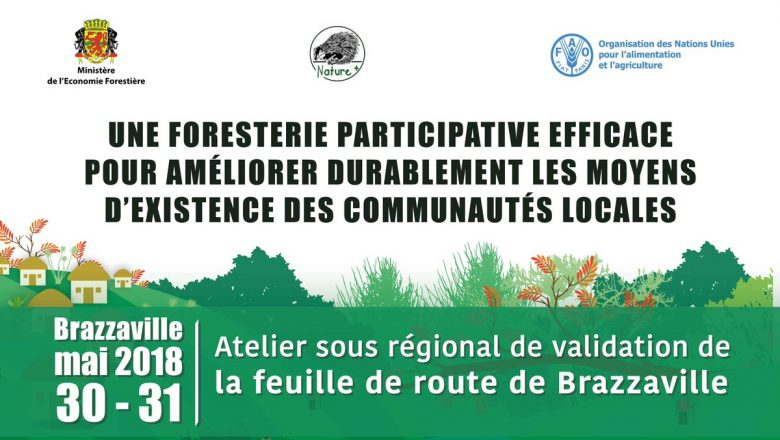 Fig. 1 : Maîtriser la gestion forestière. Source : Journal de Brazza