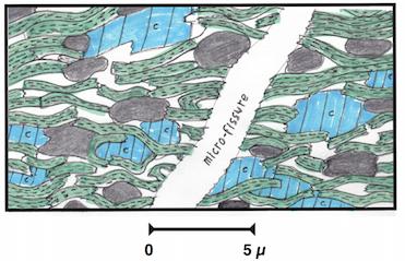 Fig. 3 : Coupe ultramicroscopique d'un gas shale très finement poreux et non perméable. On y voit de la matière organique, en noir, de la calcite rayée, en bleu, des minéraux argileux, en vert, une microfissure et des microporosités, en blanc. Le gaz est dans les microfissures, dans les microporosités non connectées, adsorbé ou occlus dans la calcite, les minéraux argileux et aussi dans la matière organique – Source : dessin Philippe Artru