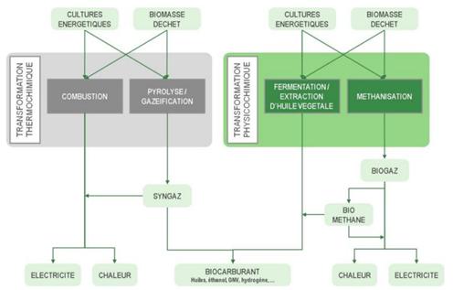 Fig. 2 : Les multiples filières des bioénergies - Source: ENEA Consulting, 2010