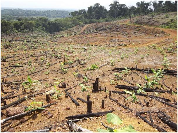 Fig. 5 : Exemple de défriche de forêt amazonienne pour l'aménagement agricole – Crédit : EPAG