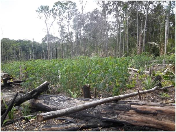 Fig. 6 : Exemple de défriche de forêt amazonienne pour l'aménagement agricole – Crédit : EPAG