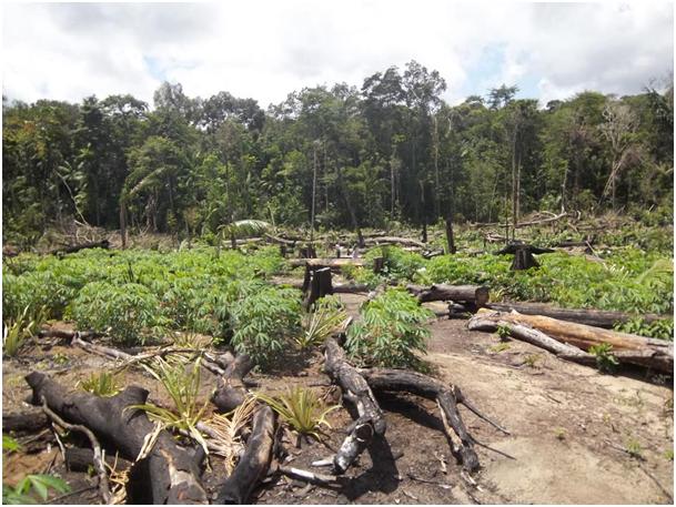 Fig. 7 : Exemple de défriche de forêt amazonienne pour l'aménagement agricole – Crédit : EPAG