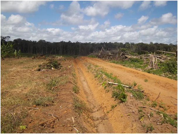 Fig. 8 : Exemple de défriche de forêt amazonienne pour l'aménagement agricole – Crédit : EPAG
