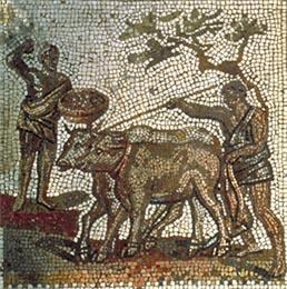 Fig. 3 : La traction animale dans la deuxième transition énergétique. Mosaïque du Site de Saint-Romain-en-Gal, conservé au Musée des Antiquités nationales. Saint-Germain-en-Laye.