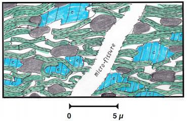 Fig. 3 : Coupe microscopique d'un oil shale. Le pétrole et du gaz humide occupent les vides et la fissure (en blanc). En vert des minéraux argileux, en bleu la calcite, en noir des amas de kérogène.