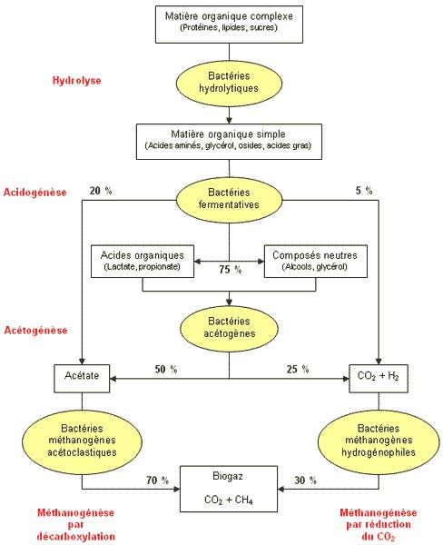 Fig. 4 : Etapes biochimiques du procédé de méthanisation - Source : http://www.methanisation.info/etapes.html