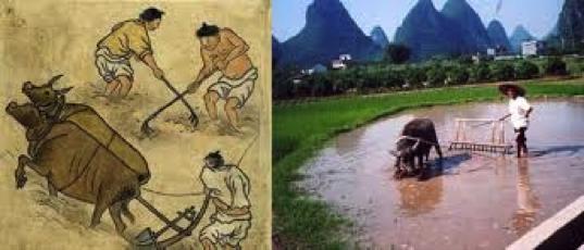 Fig. 1 : Travail paysan, principale source d'énergie mécanique. Source : fr.gblimes.com