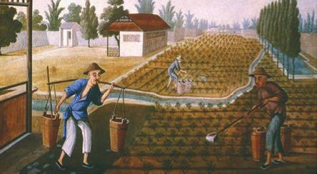 Fig. 7 : L'industrie du thé en Chine.