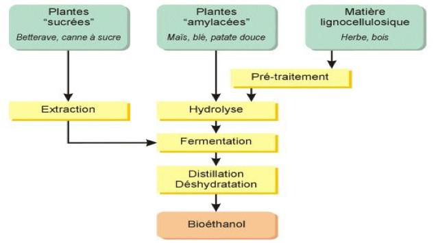 Fig. 14 : Les trois filières de production du bioéthanol - Source : Club des Bio-économistes.