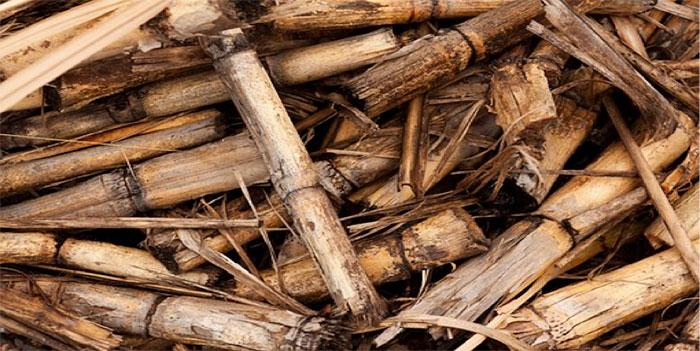 Fig 1 : Les résidus de l'agriculture et les déchets organiques agroalimentaires ou urbains font partie de la biomasse.