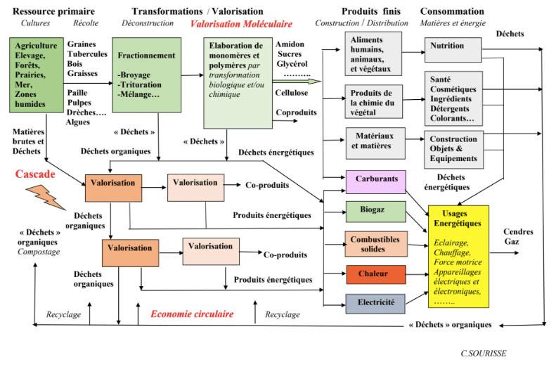 Fig. 7 : Structure d'une filière de chimie du végétal (molécule plateforme), avec ses débouchés en cascade de déchets et de produits énergétiques - Source : Association de chimie du végétal.