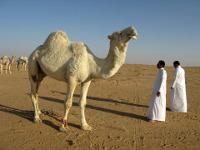 Pétrole et développement : le piège de la rente au Moyen Orient.