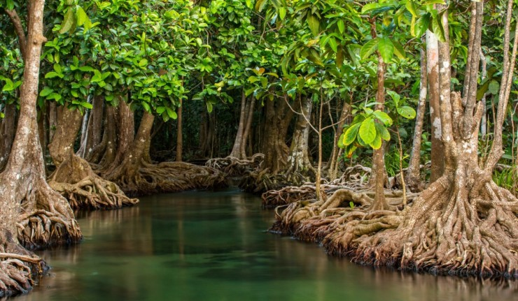 mangroves - role mangroves protection environnement